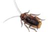 Preventa Schabenbekämpfung / Kakerlakenbekämpfung