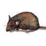 Preventa Mäusebekämpfung
