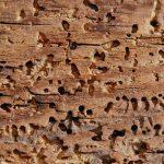 Holzwurmbekämpfung und Hausbockbekämpfung