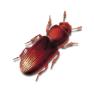 Preventa Käferbekämpfung