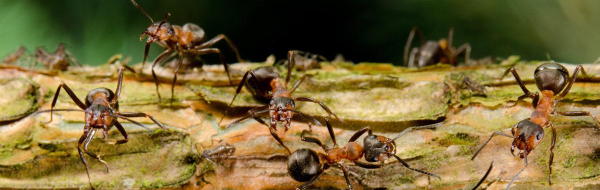 Ameisenbekämpfung für Nordbayern