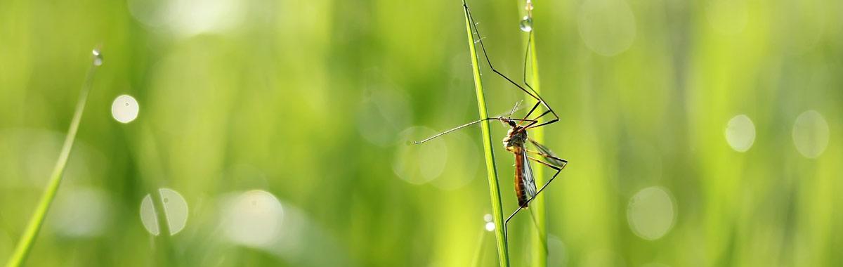 Fliegen- und Mückenbekämpfung für Nordbayern