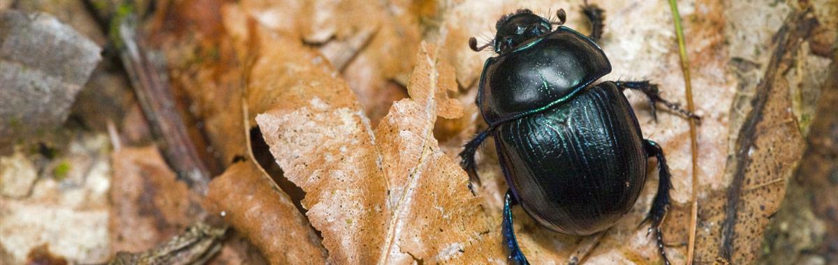 Käferbekämpfung