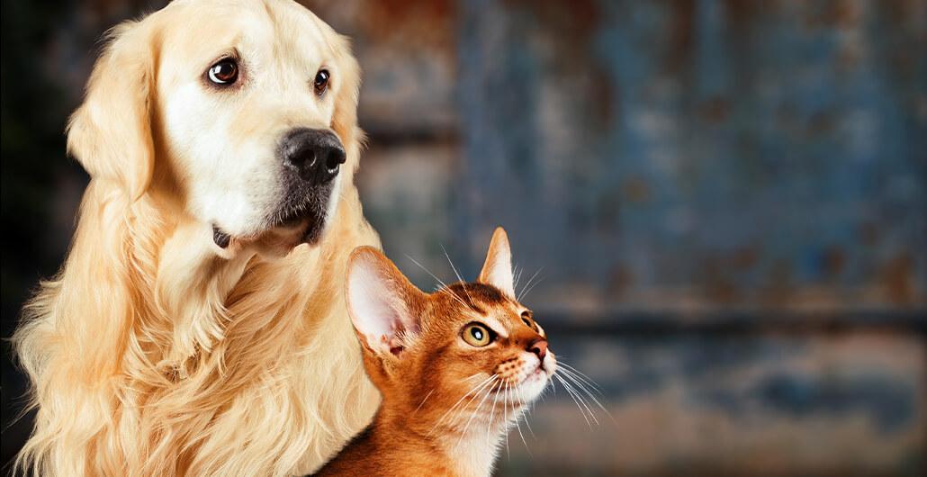 Zecken und Flöhe: Die unliebsamen Mitbringsel unserer Haustiere